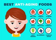 Best anti-aging foods Infographics vector stock illustration