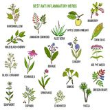 Best anti-inflammatory herbs Royalty Free Stock Photography