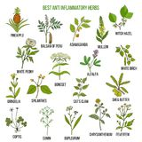 Best anti-inflammatory herbs. Vector set. Best anti-inflammatory herbs. Hand drawn vector set of medicinal plants Royalty Free Stock Photography