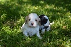 Free Best Buddies Stock Image - 41364891