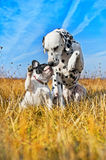 Best dog friends playing Royalty Free Stock Photography