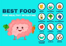 Best food for strong intestine vector illustration