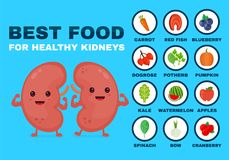 Best food for strong kidneys. Strong healthy vector illustration
