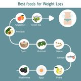 Best Foods for weight loss. Infographic presentation best foods for weight loss. Infographic with food icons. Health food Stock Image