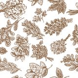 Best Fragrant Herbs seamless vector sketch Royalty Free Stock Images
