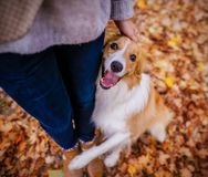 Best friend border collie dog hugs a girl royalty free stock photography