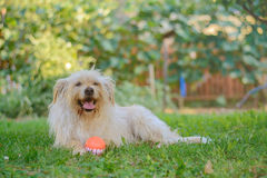 Best friend dog. With cheerful ball Stock Image
