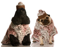 Best friends. Two dog girlfriends dressed up in fashionable clothing Royalty Free Stock Photos