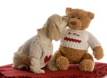 Best friends. American cocker spaniel puppy kissing teddy bear wearing matching shirts with reflection on white background Royalty Free Stock Photos