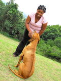Best friends. Beautiful young african american woman with extraordinary hairstyle and her best friend an old rhodesian ridgeback showing affection to each other stock photos