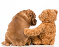 Best friends Stock Photography