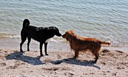 Best friends  - dogs Stock Images