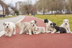 Best friends dogs poses royalty free stock image