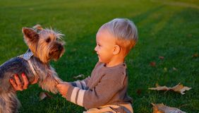 Best friends forever. Happy childhood. Sweet childhood memories. Child play with yorkshire terrier dog. Toddler boy royalty free stock photo