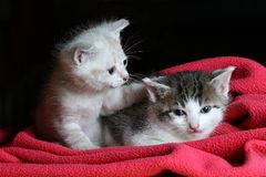 Best friends forever kittens Stock Images
