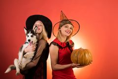 Best friends girls celebrates Halloween. Frightened friends with dog at a Halloween party. Two stylish sexy girls best royalty free stock image