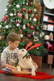 Best friends handsome blond boy and puppy red white english bulldog enjoying spending time with each other close to Christmas tree Royalty Free Stock Photo