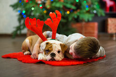 Best friends handsome blond boy and puppy red white english bulldog enjoying spending time with each other close to Christmas tree Royalty Free Stock Photos