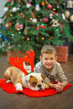Best friends handsome blond boy and puppy red white english bulldog enjoying spending time with each other close to Christmas tree. On red carpet mat. Dog Royalty Free Stock Images