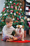 Best friends handsome blond boy and puppy red white english bulldog enjoying spending time with each other close to Christmas tree Stock Photo