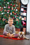 Best friends handsome blond boy and puppy red white english bulldog enjoying spending time with each other close to Christmas tree Stock Image