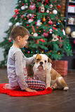 Best friends handsome blond boy and puppy red white english bulldog enjoying spending time with each other close to Christmas tree Stock Photography