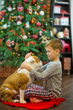 Best friends handsome blond boy and puppy red white english bulldog enjoying spending time with each other close to Christmas tree. On red carpet mat. Dog Royalty Free Stock Photography