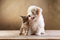 Best friends - kitten and small fluffy dog. Looking sideways - copy space stock photography
