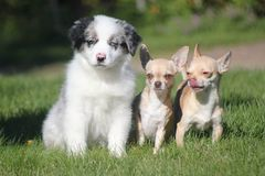 Best friends. My 3 dogs in summer Stock Images