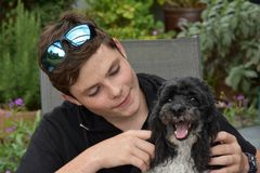 Best friends, teenage boy and his harlequin poodle royalty free stock images