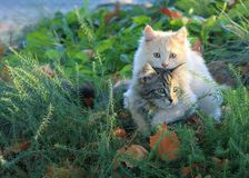 Best Friends. Two kittens in a loving embrace Royalty Free Stock Photos