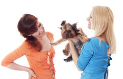 Best friends. royalty free stock photo