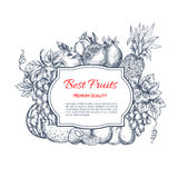 Best fruits harvest sketch poster Royalty Free Stock Image