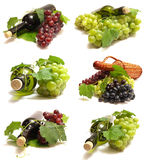 The best grape wine Stock Images