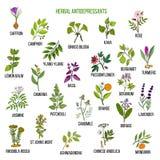 Best herbal antidepressants. Hand drawn vector set of medicinal plants stock illustration