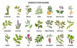 Best herbal aphrodisiacs. Hand drawn vector set of medicinal plants Royalty Free Stock Images