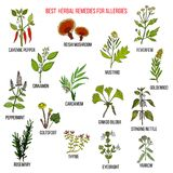 Best herbal remedies for allergies. Hand drawn vector set of medicinal plants Stock Photos