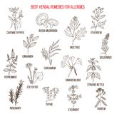 Best herbal remedies for allergies. Hand drawn vector set of medicinal plants Royalty Free Stock Photography