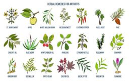Best herbal remedies for arthritis. Hand drawn vector set of medicinal plants Stock Image