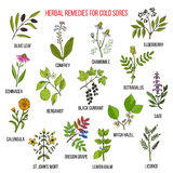 Best herbal remedies for cold sores Royalty Free Stock Photos