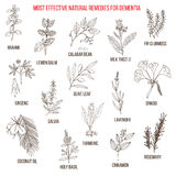 Best herbal remedies for dementia Royalty Free Stock Images