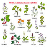 Best herbal remedies for deppression Stock Image