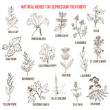Best herbal remedies for deppression Stock Images