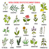 Best herbal remedies for effective dandruff removal Stock Photography