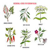 Best herbal remedies for fibromyalgia. Hand drawn set of medicinal herbs Stock Images