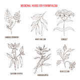 Best herbal remedies for fibromyalgia. Hand drawn set of medicinal herbs Royalty Free Stock Image