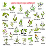 Best herbal remedies for hemorrhoids Stock Photography