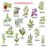 Best herbal remedies for reducing high fever. Hand drawn vector set of medicinal plants Royalty Free Stock Photos