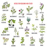 Best herbal remedies for reducing high fever. Hand drawn vector set of medicinal plants Stock Photo