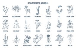 Best herbal remedies to treat amenorrhea. Hand drawn vector set of medicinal plants Stock Image